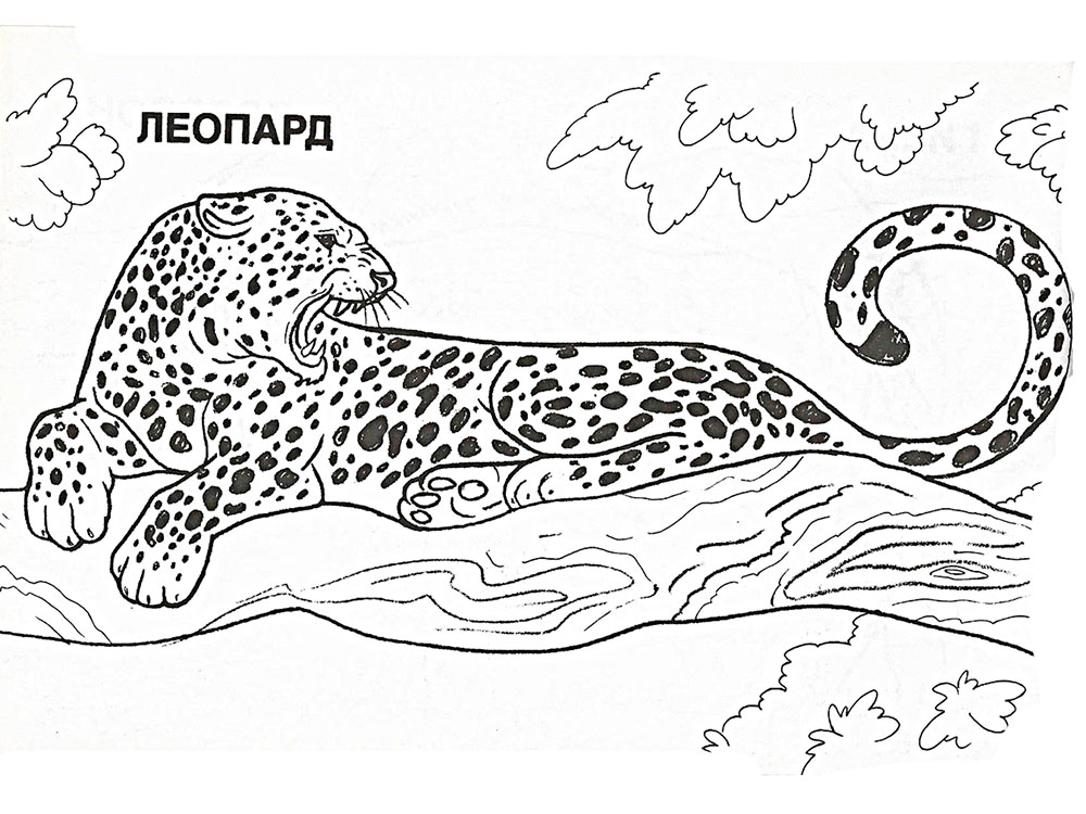 Leopard face coloring page