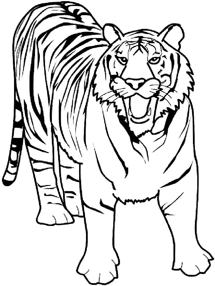 Tigers  Coloring Pages for Adults  JustColor